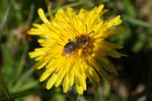 Bienenbesuch