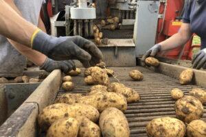 Bollheimer_Kartoffelroder