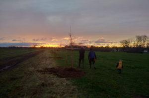 Neue Bäume auf Bollheim