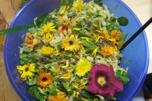Salat aus Wildkräutern