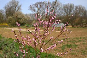 Zuchtgarten im Frühjahr auf Haus Bollheim